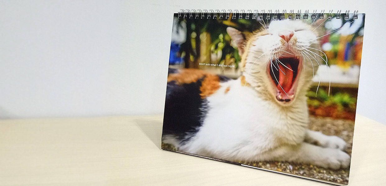 Cat Welfare Society Calendar 2018